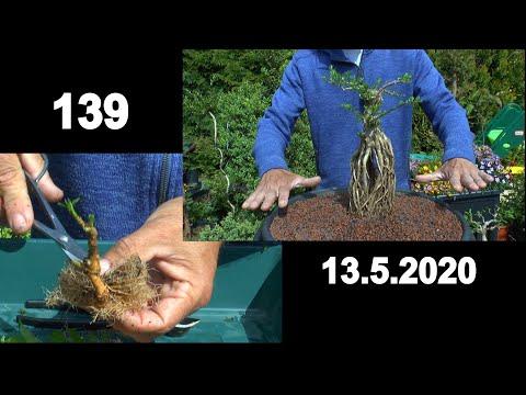 bonsai-wie-geht-das-und-was-kann-man-machen-jetzt-im-frühling