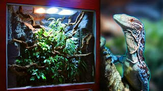 How I made a Huge Reptile Vivarium - Full Build!