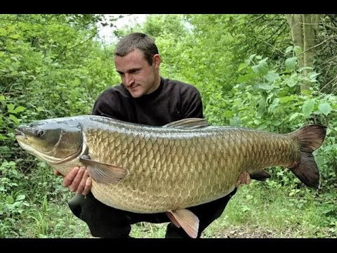 Fish white amur youtube for White amur fish