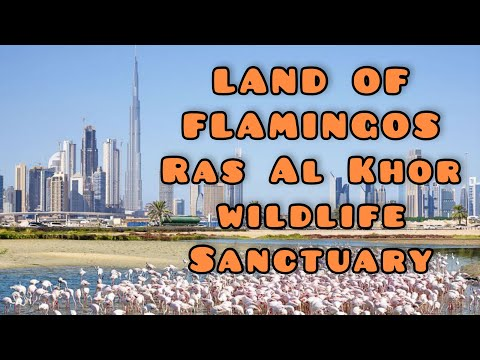 Best and Must Visit Natural Tourist Spot in Dubai. Ras Al Khor Wildlife Sanctuary.