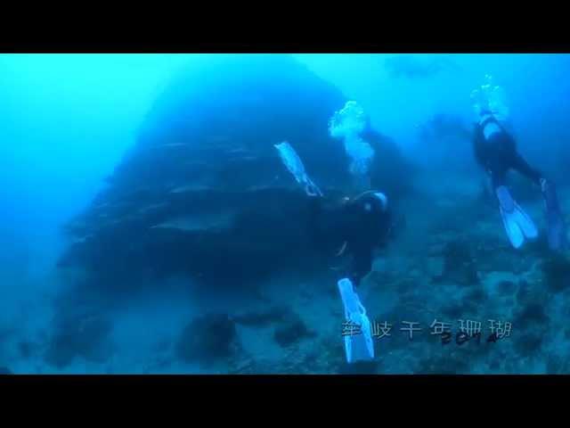 牟岐千年珊瑚(Grand coral)
