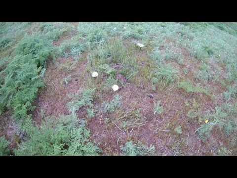 мицелий белый степной гриб с гидрогелем
