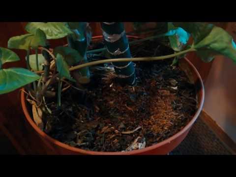 Никаких мушек и плесени!! Заварка и кофейная гуща для горшечных растений.