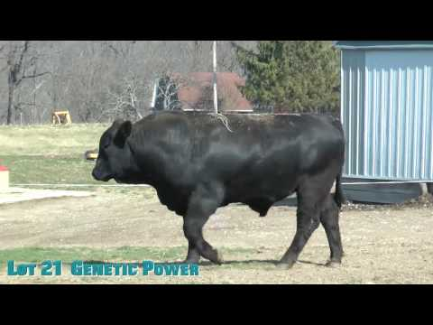 Lot 21  Genetic Power