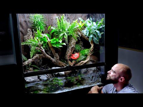 aquascape-tutorial:-huge-xl-paludarium-/-vivarium-flooded-rainforest-build-(how-to:-step-by-step)