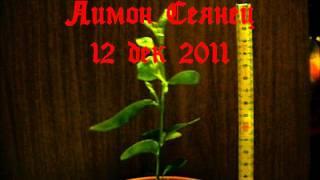 Видео-дневник Лимона-сеянца 17 февраля 2012(Видео-дневник Лимона-сеянца 17 февраля 2012 (музыка тут: http://blackclan.ucoz.ru/MUZig_Other/tavernmusic05.wav), 2012-02-17T11:07:36.000Z)