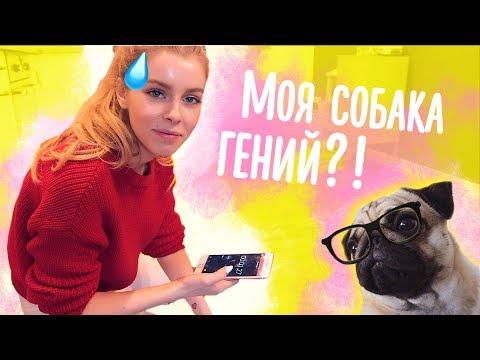САМЫЙ УМНЫЙ МОПС! Тест для моей собаки! | Ира Блан