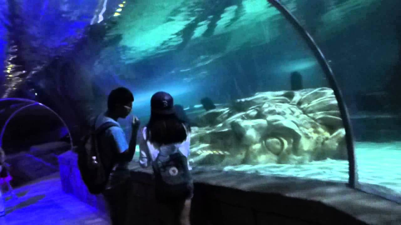 SeaLife Aquarium at Mall of America - YouTube