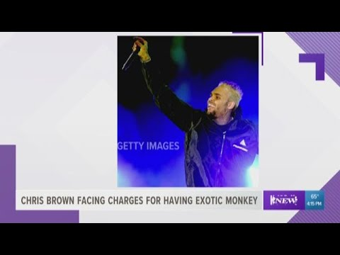 Chris Brown faces charges for having exotic monkey Mp3