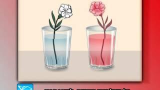 Okul Öncesi: Fen Deneyleri - Karanfilin Renklenmesi