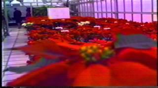 rosebud - alberta