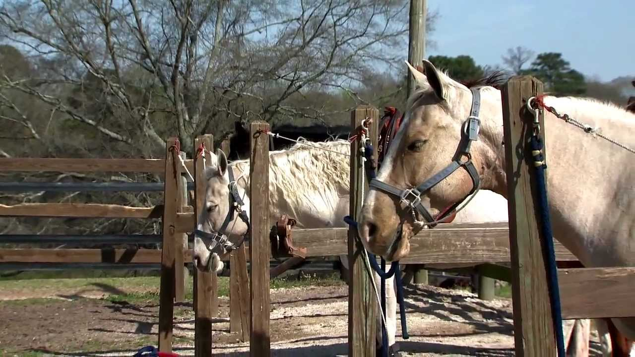 Behind The Scenes With Auburn Equestrian Youtube