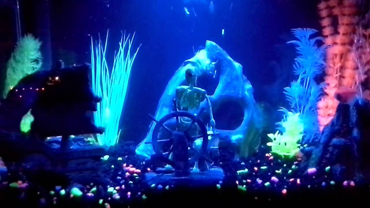 Fish Tank Wallpaper Hd My New Glofish Setup Youtube