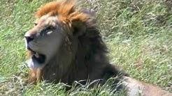 Tunnelmia Serengetin kansallispuistosta.
