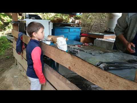 Ребенок в ШОКЕ - увидел как разделывают живую рыбу