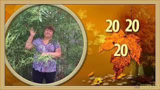 ❀❀❀С юбилеем 60 лет прекрасной женщине! Прекрасная песня С Днем рождения! Поздравляйте красиво