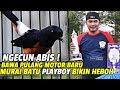 Ngecun Abis Bawa Pulang Motor Baru Murai Batu Playboy Bikin Heboh Di Gubernur Banten  Mp3 - Mp4 Download