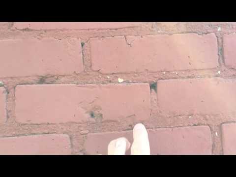 Absurd Video!