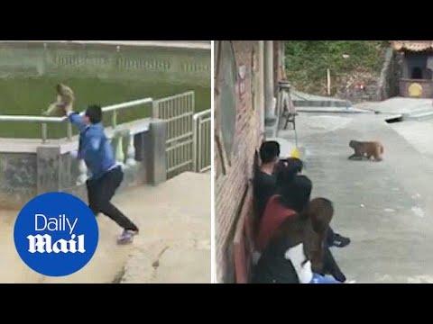 Empujó a un macaco y sufrió una cruel venganza animal