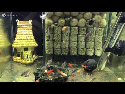 Tự làm bộ lọc vi sinh cực chất xử lý nước bể cá trong vắt
