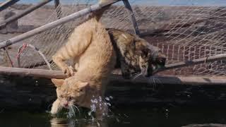 『劇場版 岩合光昭の世界ネコ歩き あるがままに、水と大地のネコ家族』本編映像