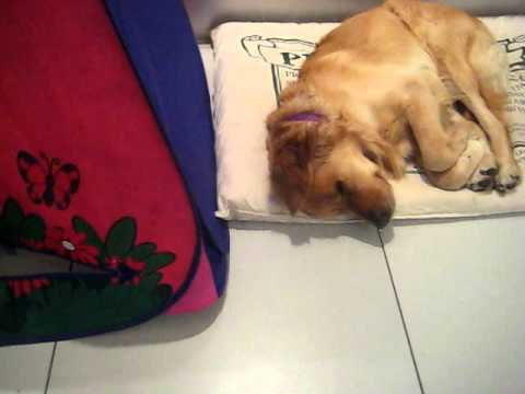 Very funny dog and cat video.