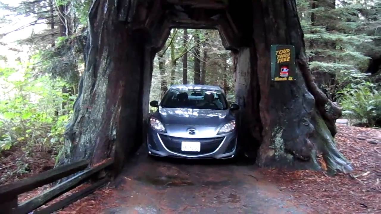Driving a car thru a redwood tree - YouTube