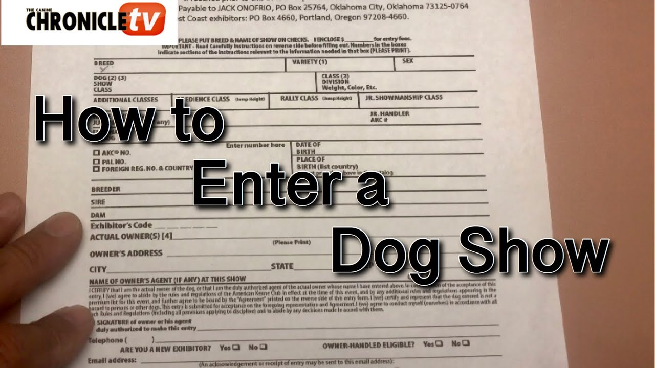 How to Enter a Dog Show? From Blue Rose Kennel