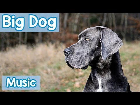 Music for Big Dogs! Calming Music for Anxious or Rowdy Big Dogs! Calm Your Large Dog NEW 2018!