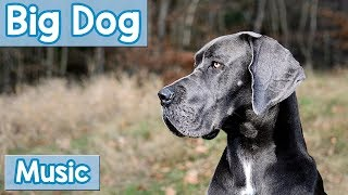 Music for Big Dogs! Calming Music for Anxious or Rowdy Big Dogs! Ca...