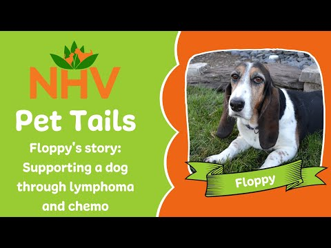 NHV Pet Tails: Supporting Floppy Through Lymphoma & Chemo