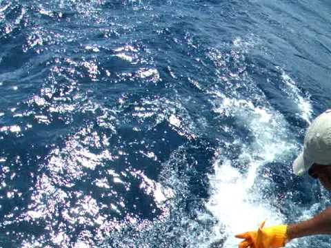 Deep sea fishing in st lucia sail fish youtube for Deep sea fishing st lucia