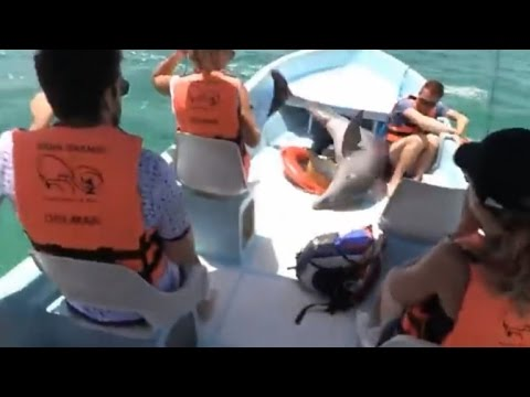 Watch This Dolphin Shock Tourists By Leaping On Sightseeing Boat