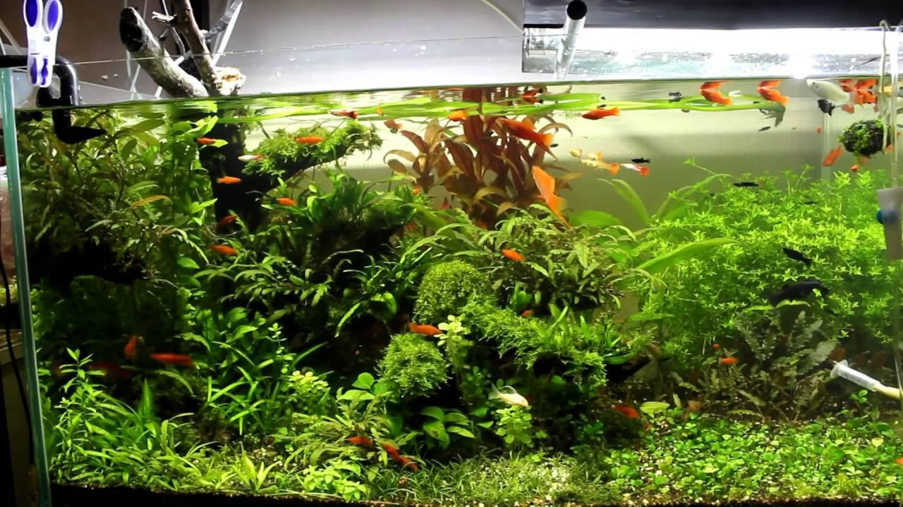 рецепт браги в аквариум