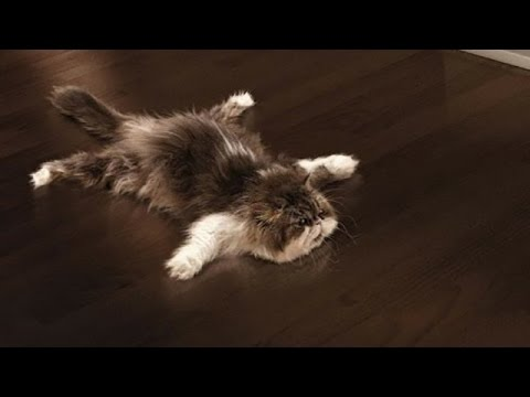 Funny Cats Sliding on Wooden Floors Compilation 2014 [HD ...
