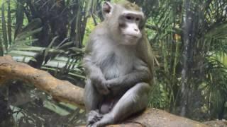 обезьяны приколы