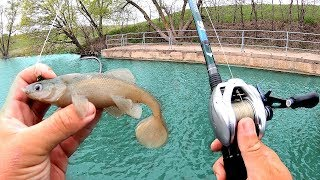 We were NOT EXPECTING Pond Fish to DESTROY this Bait!!!