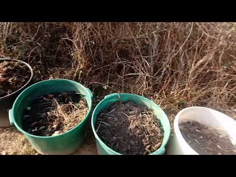 Horse Manure For Growing Gardens