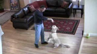 Dog Trick -- Teach Your Dog To Balance & Sit Pretty