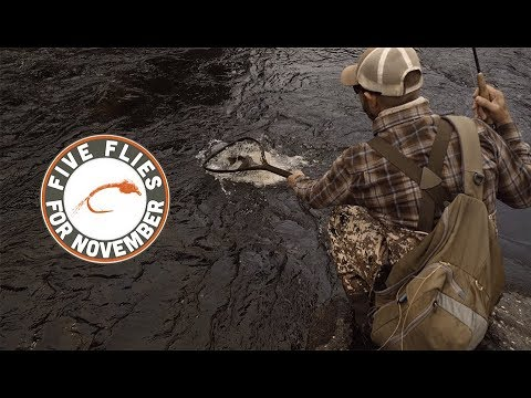 Five Flies For November 2018 - Fly Fishing The South Platte At Deckers