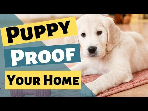 Puppy Proofing Your House  Puppy Proof For New Puppy