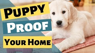 Puppy Proofing Your House - Puppy Proof For New Puppy