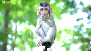 Top Viral Funny Monkeys clip 2017 and Cute girl Playing game with Baby monkey Group