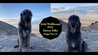 Irish Wolfhound Pov Hike | Doggy Days #3