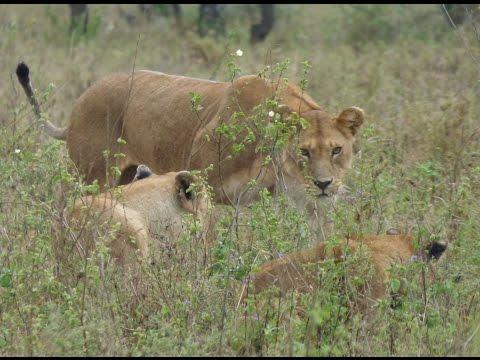 Tanzania Safari September-October 2014
