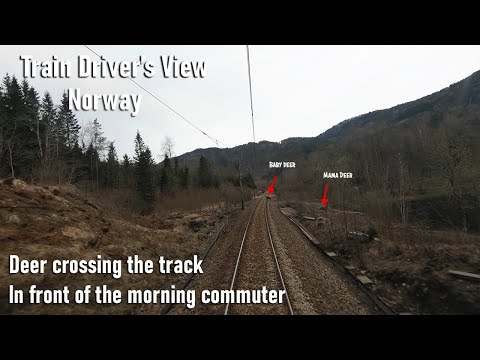 4K CAB VIEW: Deer Crossing The Track In Front Of The Morning Commuter