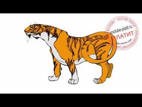 картинки тигр карандашом
