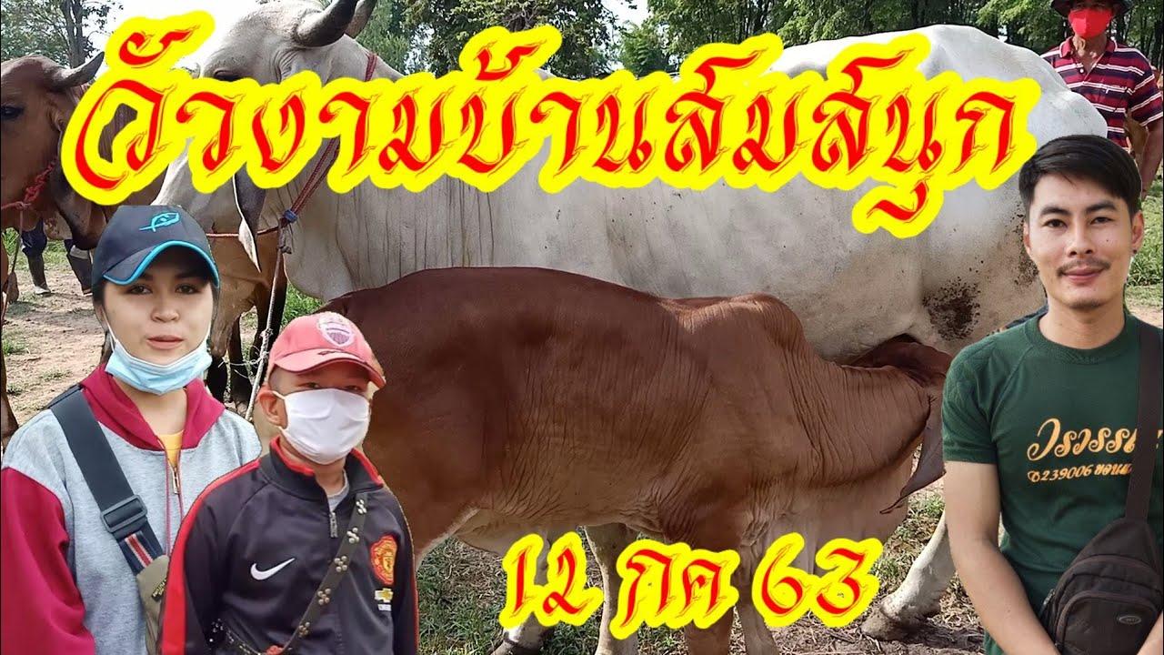 ราคาวัววันนี้(12กค63)วัวบราห์มันสวยๆ คนงบน้อยก็ซื้อได้ ราคาเริ่มต้น 20,500 บาท ตลาดบ้านสมสนุก สารคาม