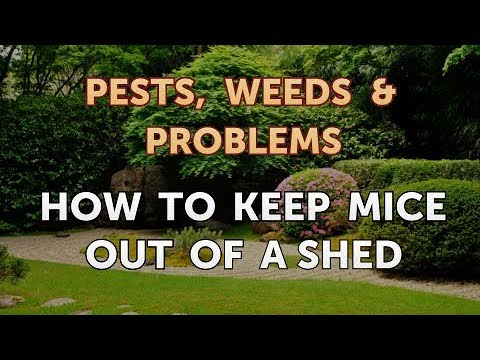 How To Keep Mice Out Of A Shed