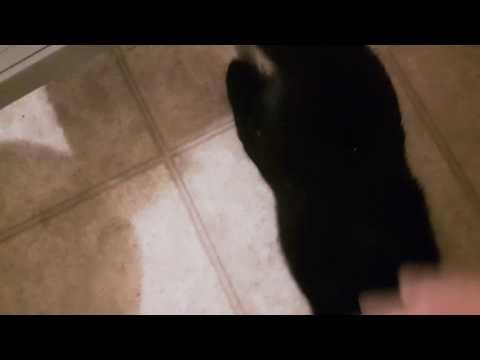 Crazy horny kitty